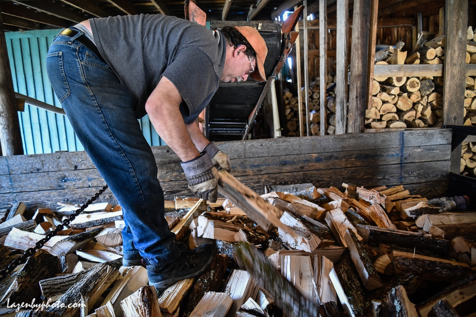 Hector Chaloux distributes wood in dump truck after it has moved from processor to truck via conveyor belt to his left.